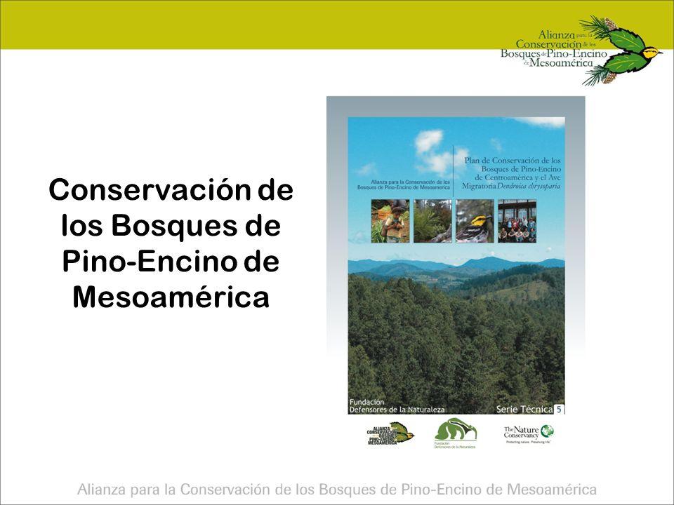 Conservación de los Bosques de Pino-Encino de Mesoamérica