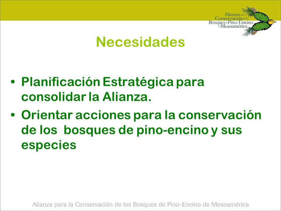 Necesidades Planificación Estratégica para consolidar la Alianza.
