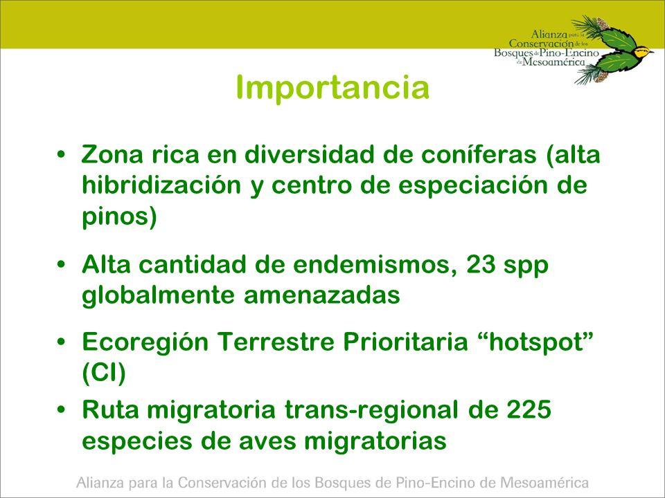 Importancia Zona rica en diversidad de coníferas (alta hibridización y centro de especiación de pinos)