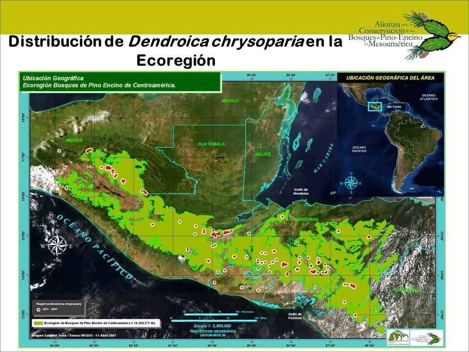 Distribución de Dendroica chrysoparia en la Ecoregión