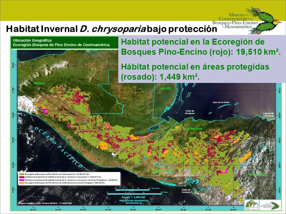 Habitat Invernal D. chrysoparia bajo protección