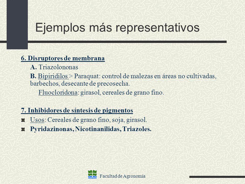 Ejemplos más representativos