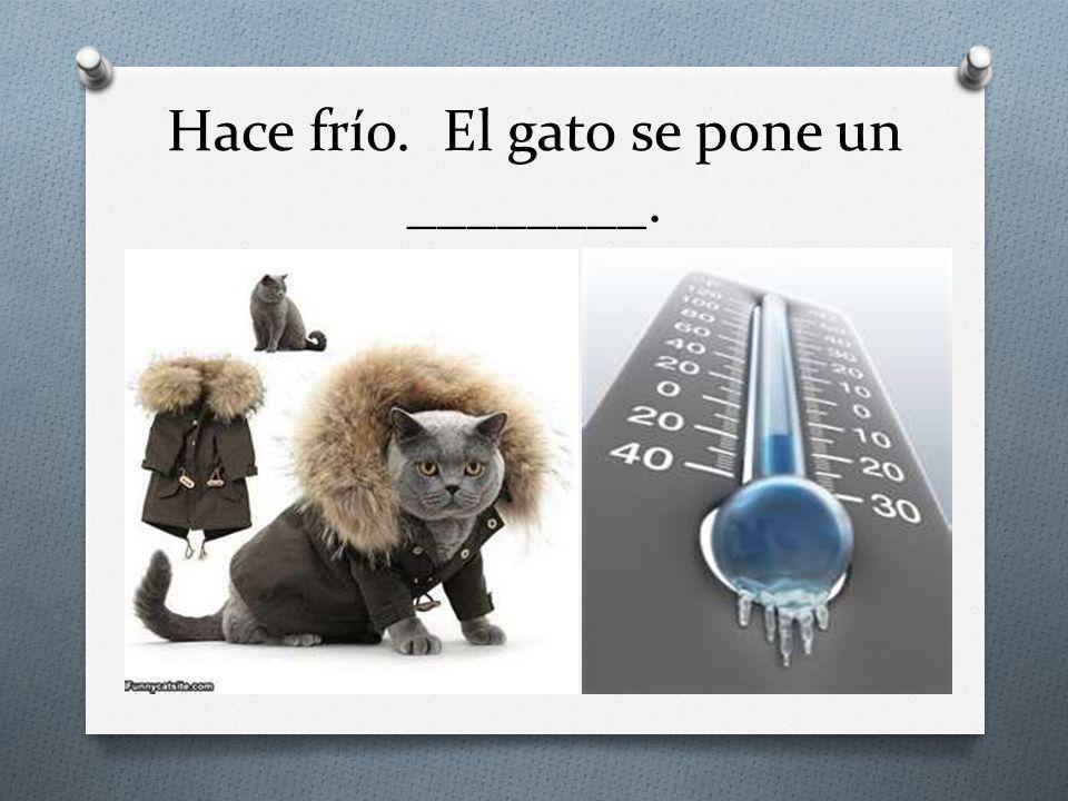 Hace frío. El gato se pone un ________.