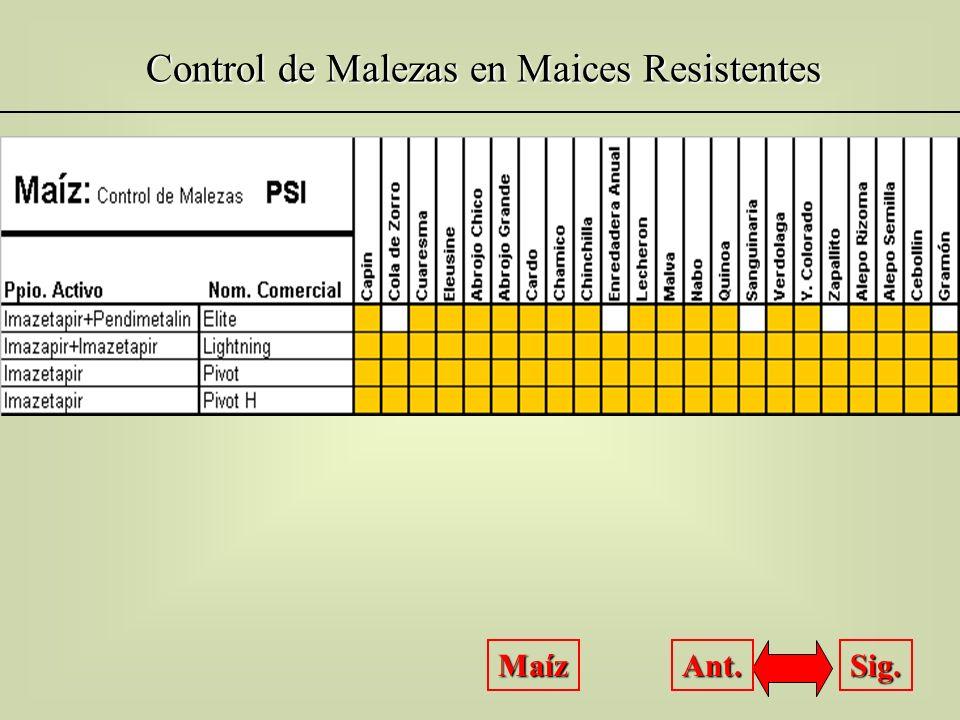 Control de Malezas en Maices Resistentes