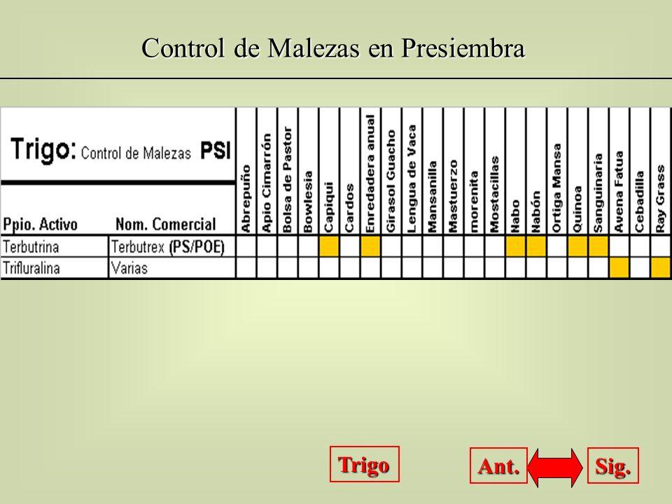 Control de Malezas en Presiembra