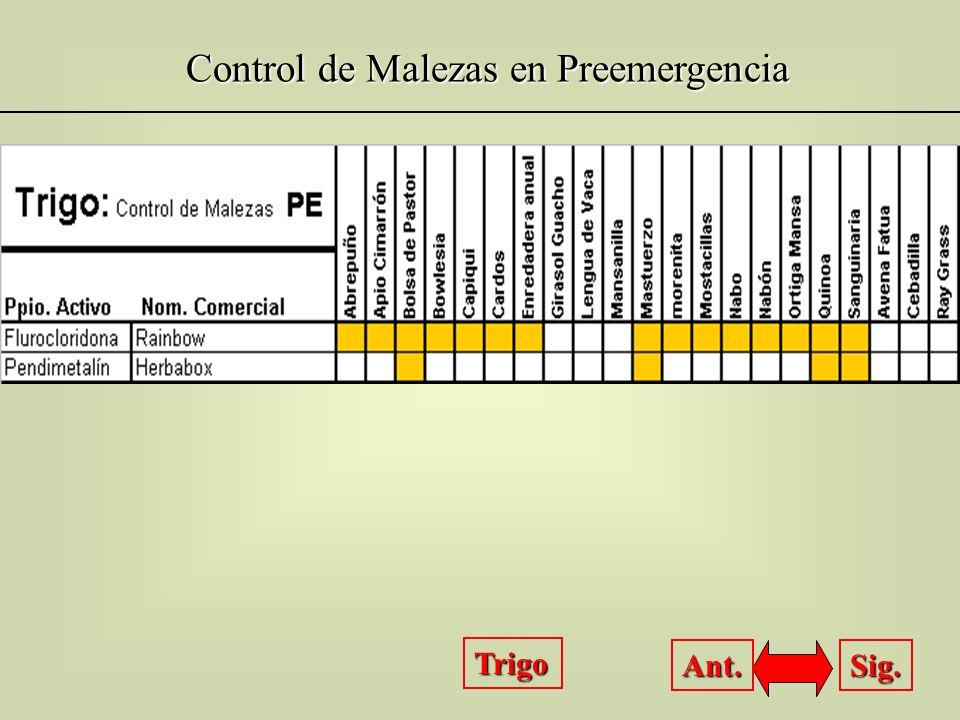 Control de Malezas en Preemergencia