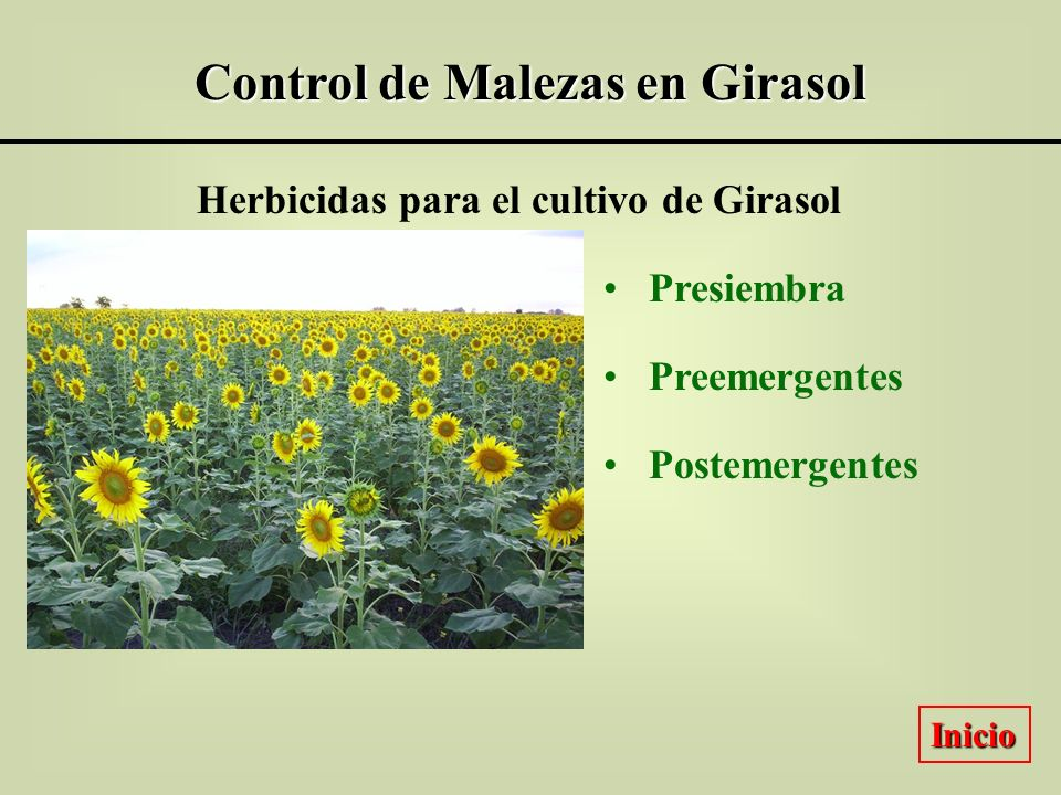 Control de Malezas en Girasol