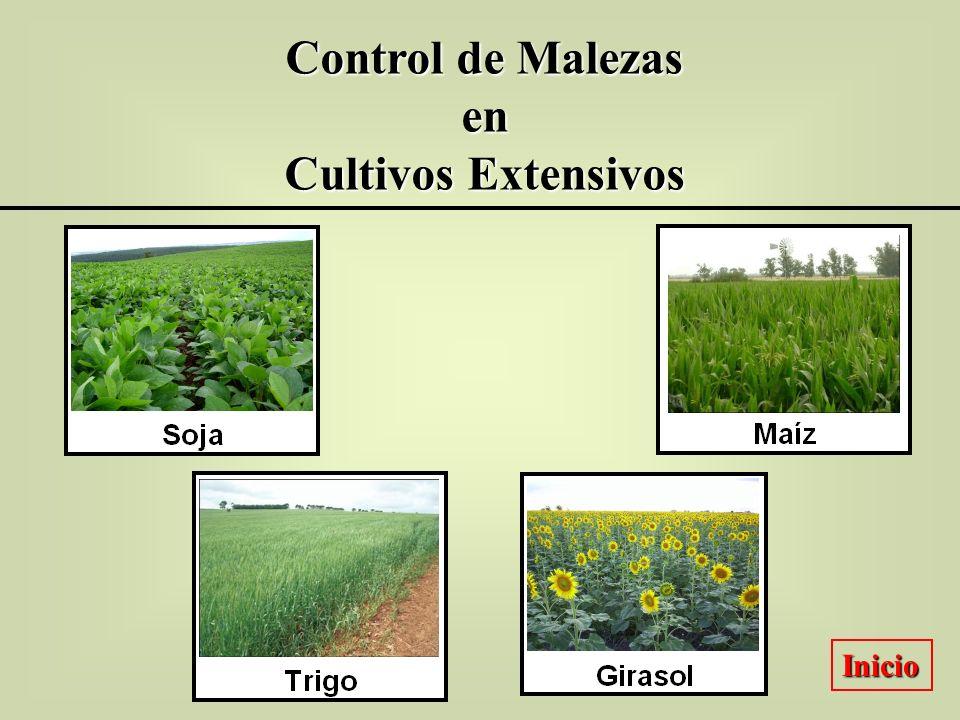 Control de Malezas en Cultivos Extensivos