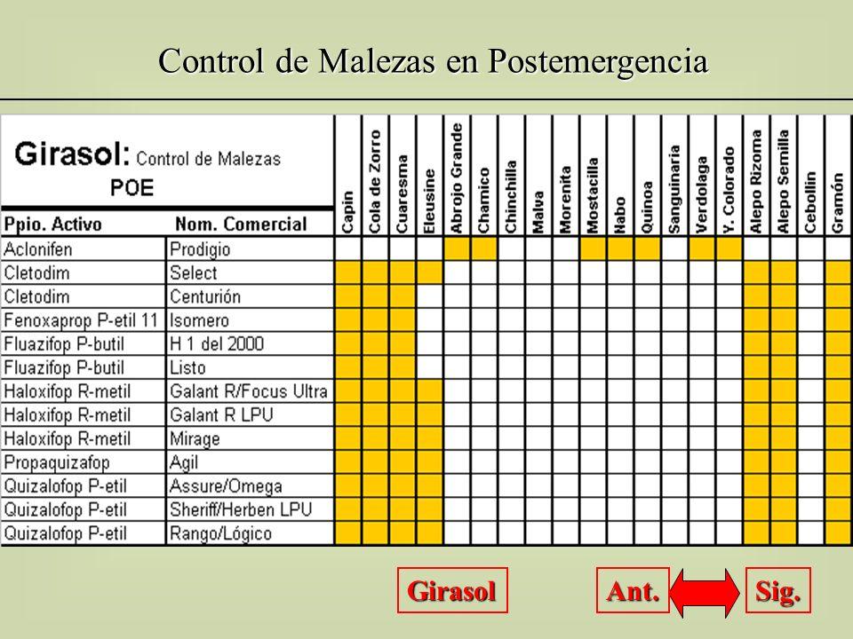 Control de Malezas en Postemergencia