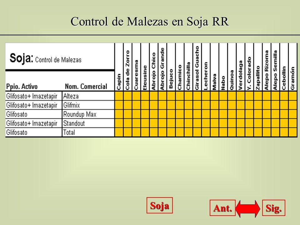Control de Malezas en Soja RR