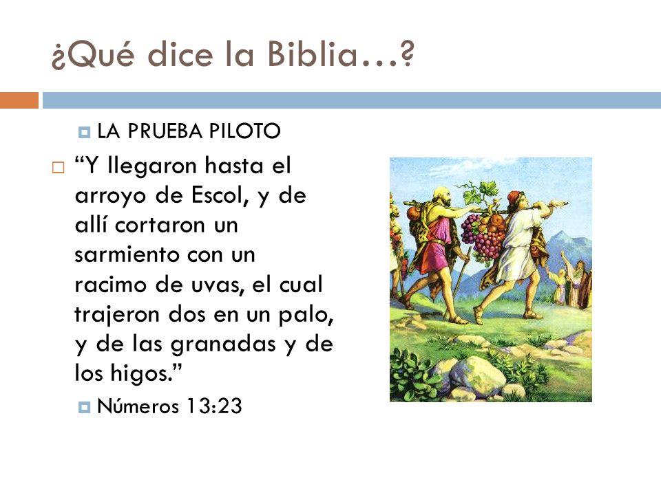 ¿Qué dice la Biblia… LA PRUEBA PILOTO.