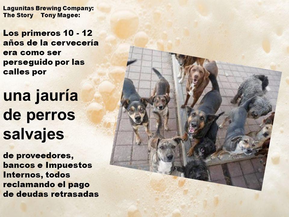 una jauría de perros salvajes