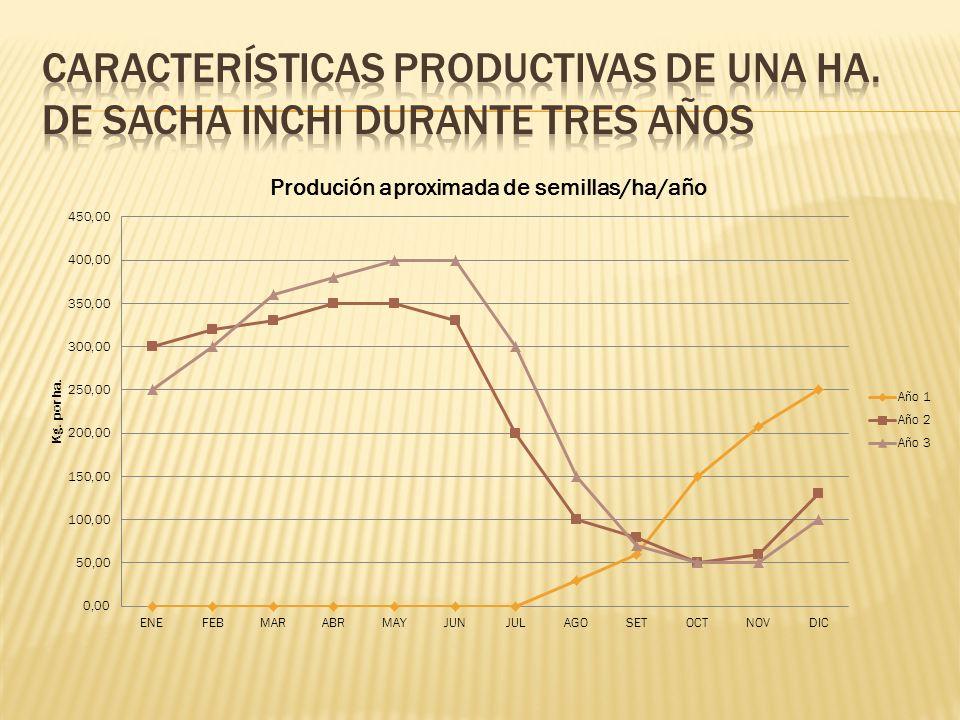 Características productivas de una ha. de sacha inchi durante tres años