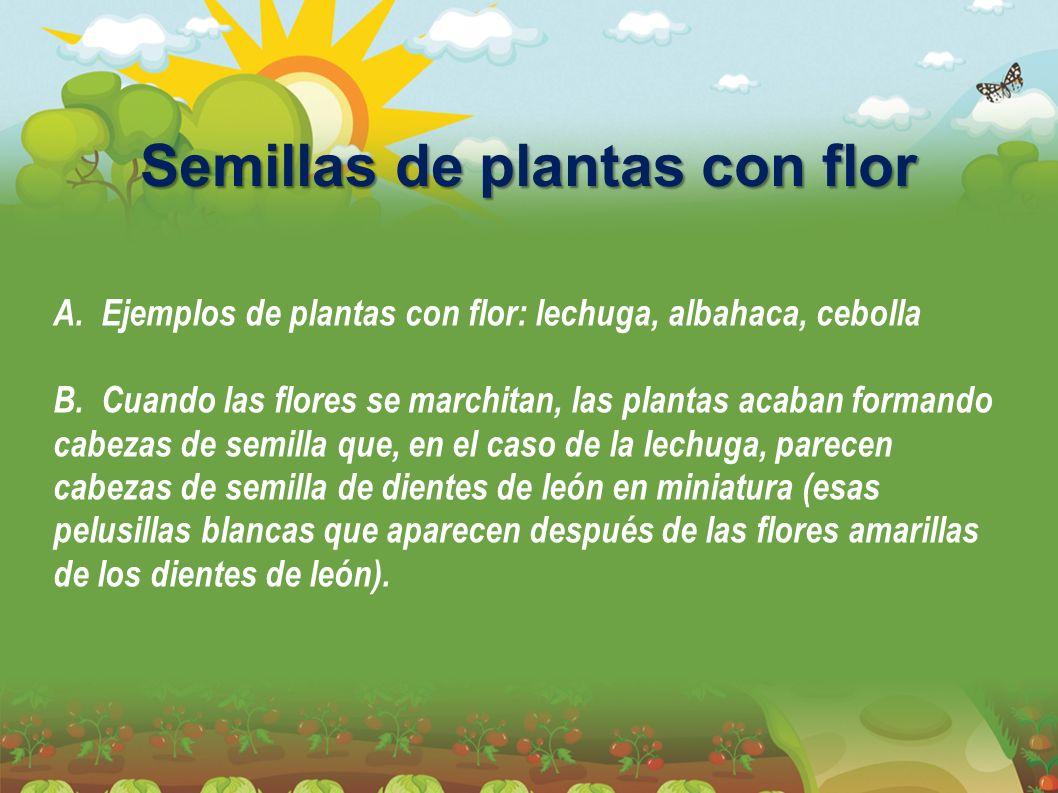 Semillas de plantas con flor