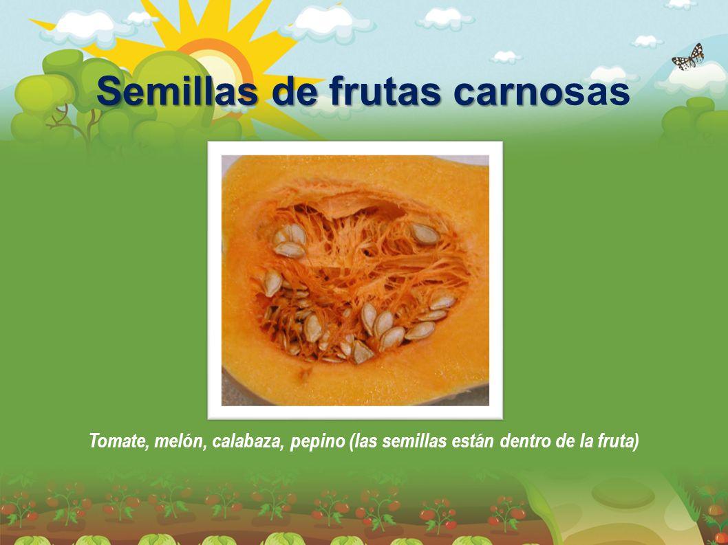 Semillas de frutas carnosas