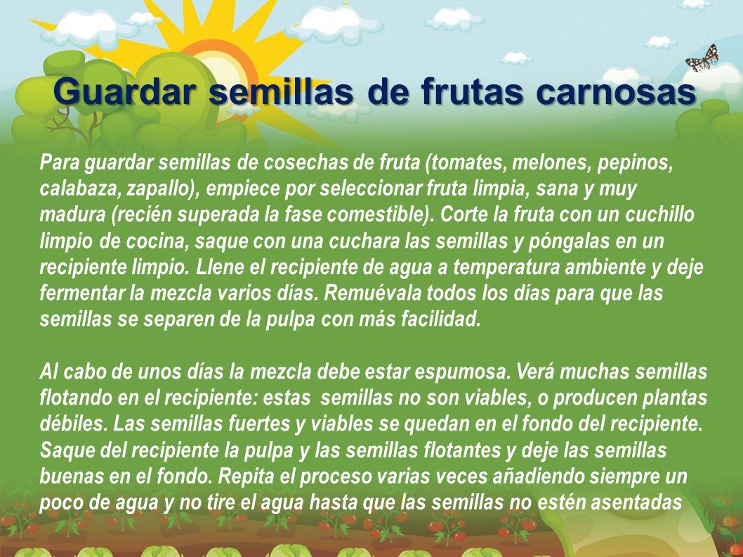 Guardar semillas de frutas carnosas