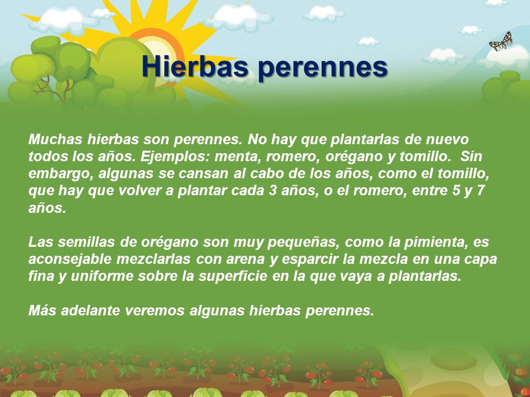 Muchas hierbas son perennes