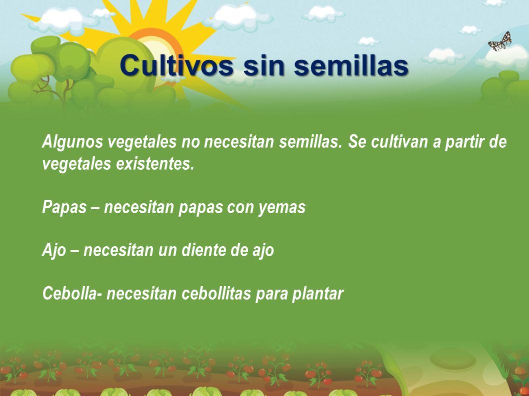 Cultivos sin semillas Algunos vegetales no necesitan semillas. Se cultivan a partir de vegetales existentes.