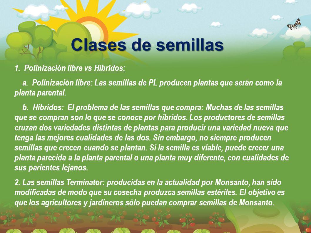 Clases de semillas 1. Polinización libre vs Híbridos: