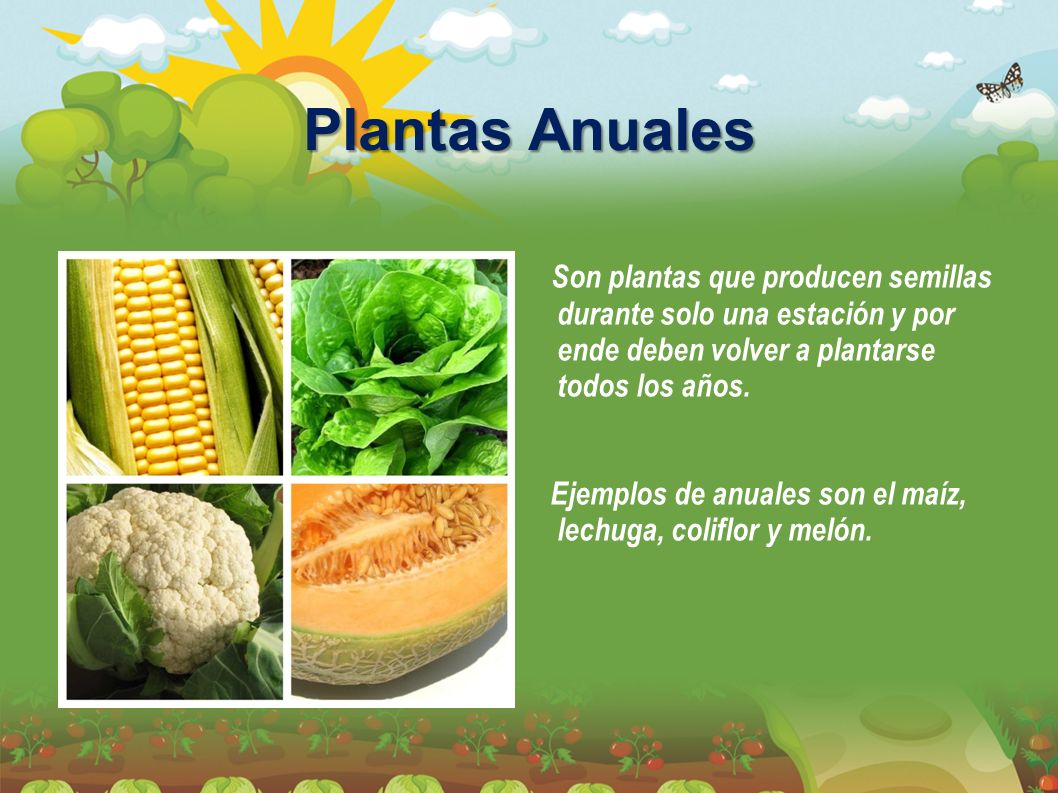 Por qu conservar semillas ppt video online descargar for Que son plantas ornamentales ejemplos