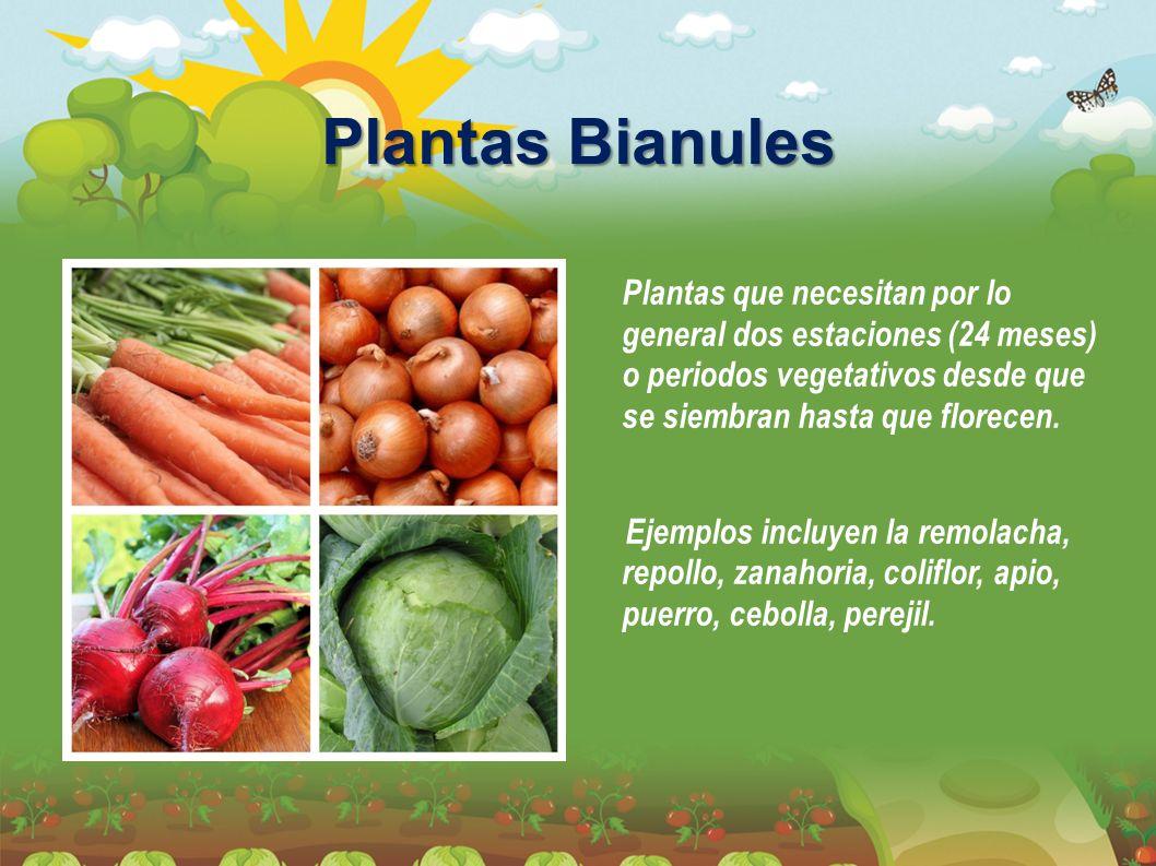 Plantas Bianules