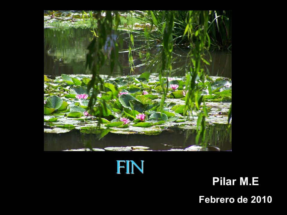 fin Pilar M.E Febrero de 2010