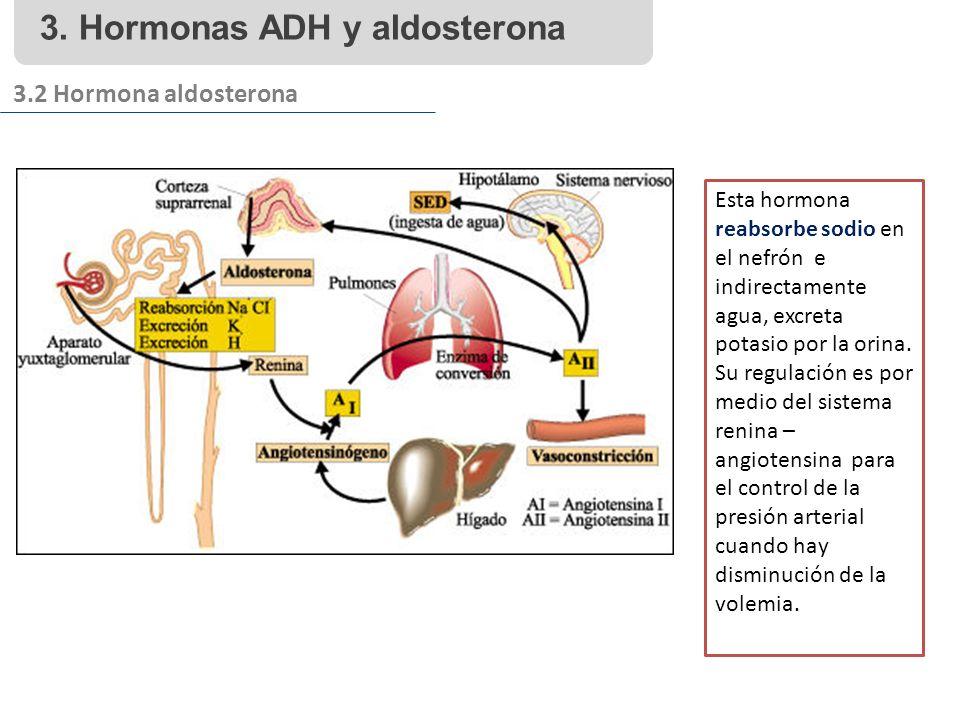 3. Hormonas ADH y aldosterona