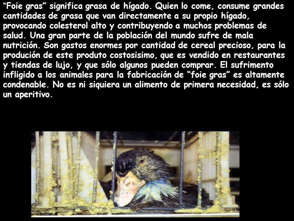 Foie gras significa grasa de hígado