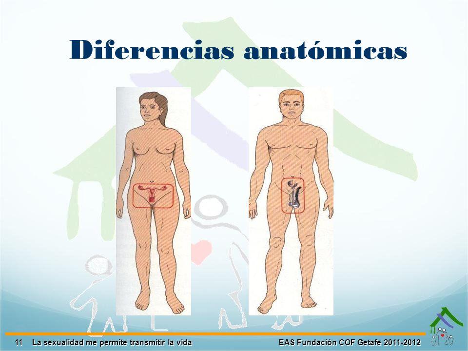 Diferencias anatómicas