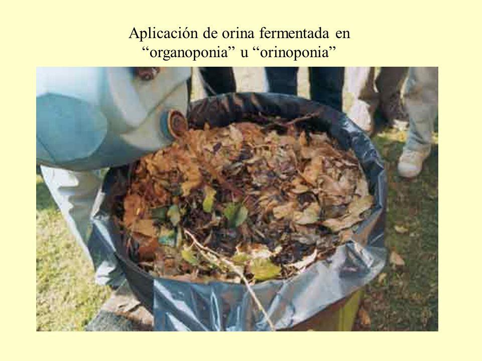 Aplicación de orina fermentada en organoponia u orinoponia