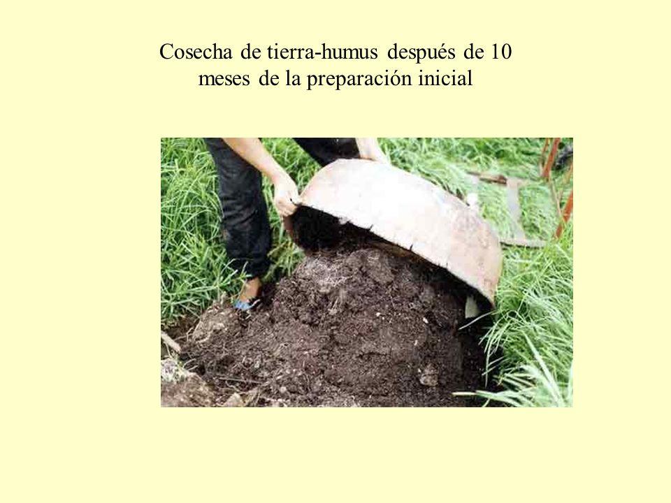 Cosecha de tierra-humus después de 10 meses de la preparación inicial