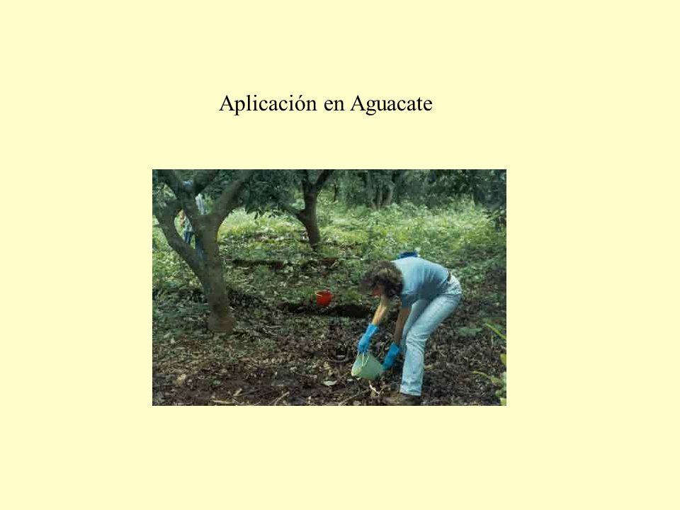 Aplicación en Aguacate