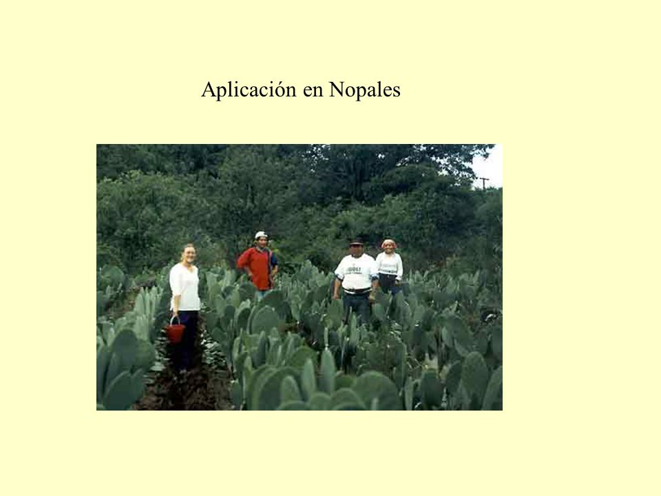 Aplicación en Nopales