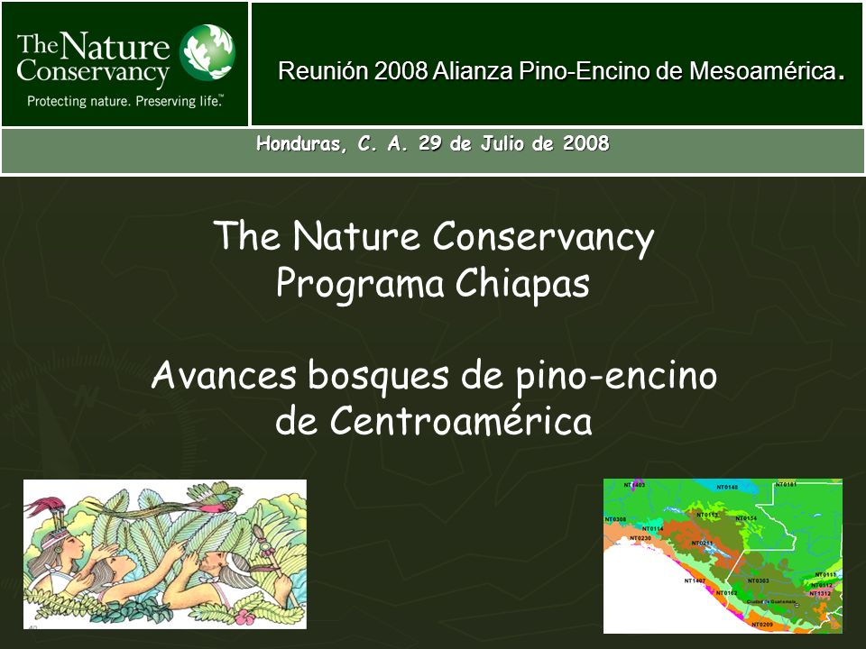 The Nature Conservancy Programa Chiapas Avances bosques de pino-encino