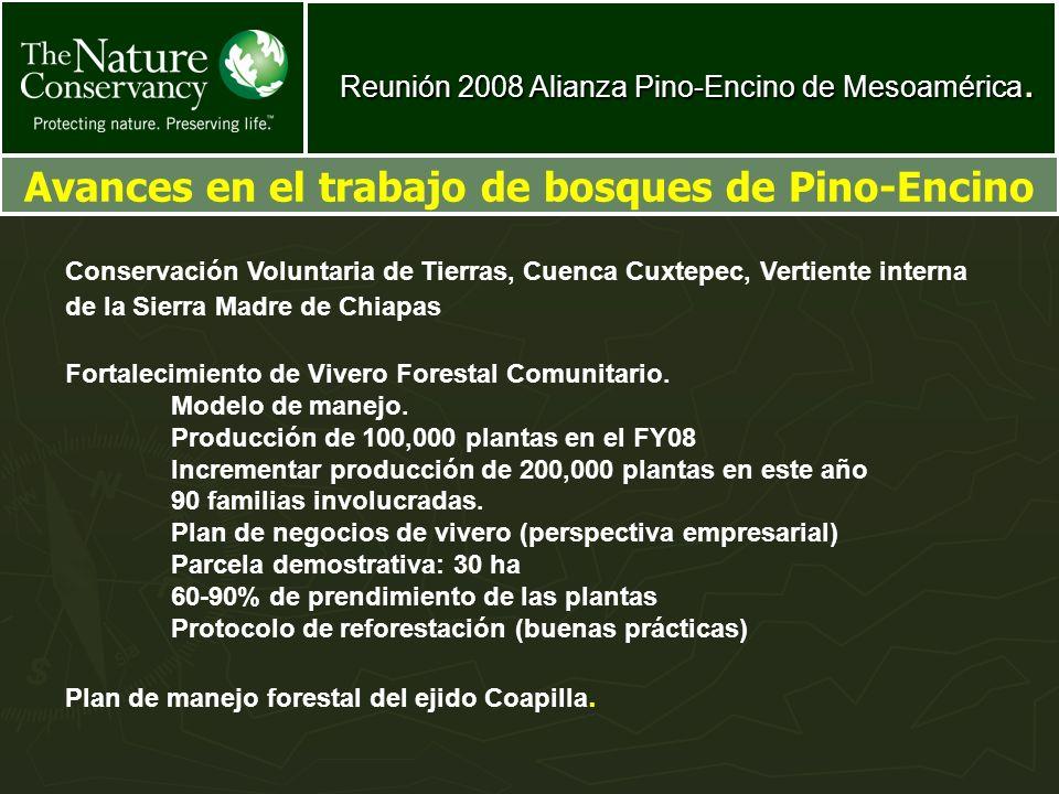 Avances en el trabajo de bosques de Pino-Encino