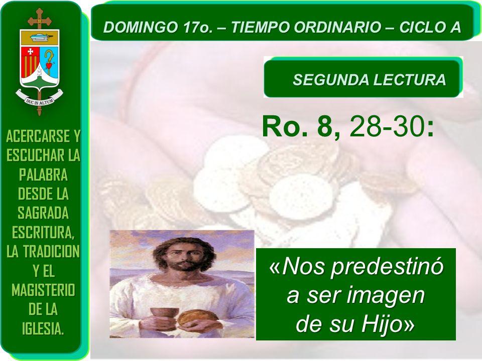 Ro. 8, 28-30: «Nos predestinó a ser imagen de su Hijo»
