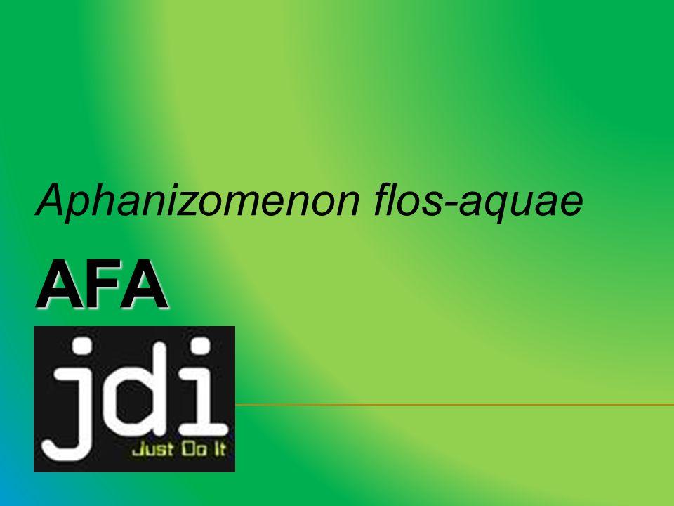 Aphanizomenon flos-aquae AFA