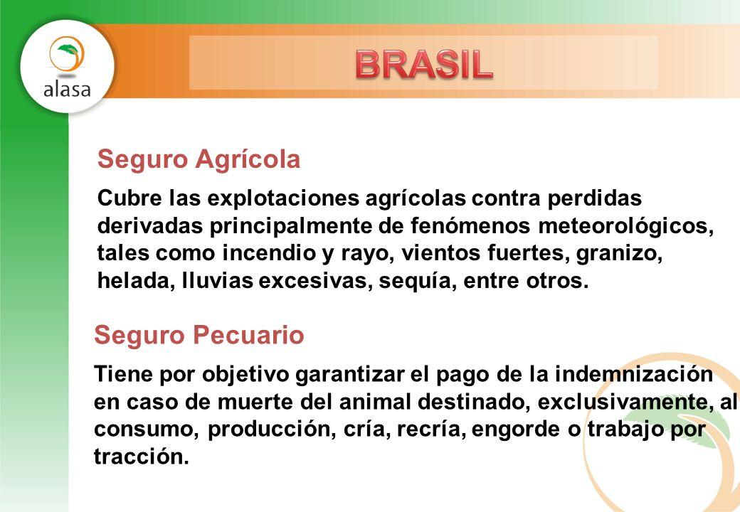 BRASIL Seguro Agrícola Seguro Pecuario