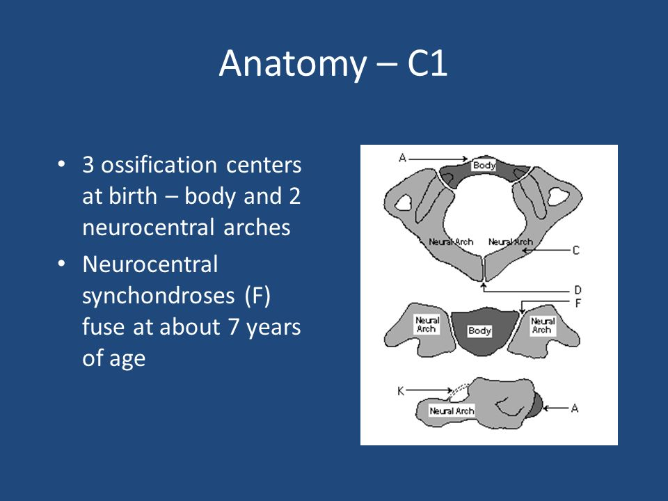 Anatomy – C1 3 ossification centers at birth – body and 2 neurocentral arches.