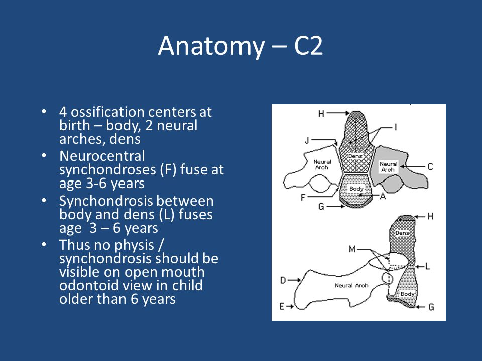 Anatomy – C2 4 ossification centers at birth – body, 2 neural arches, dens. Neurocentral synchondroses (F) fuse at age 3-6 years.