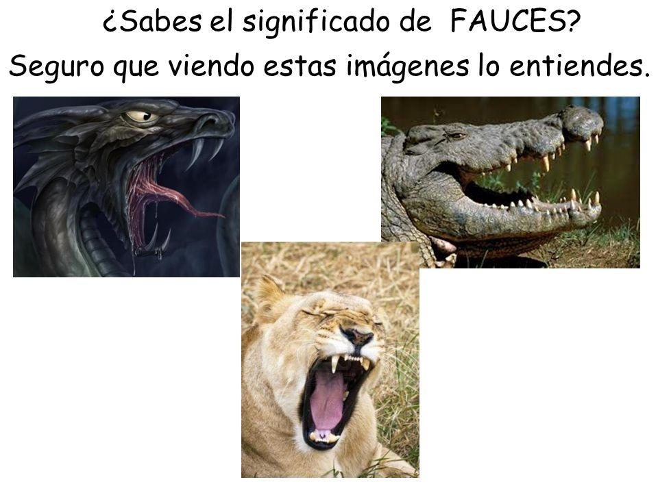 ¿Sabes el significado de FAUCES