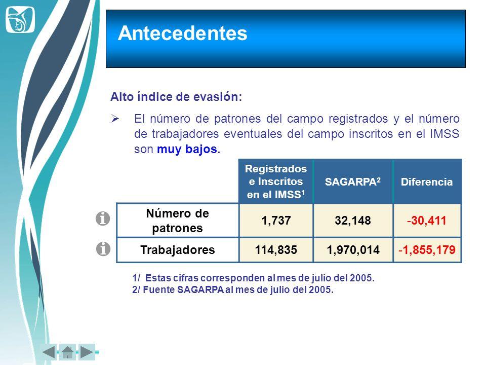 Registrados e Inscritos en el IMSS1