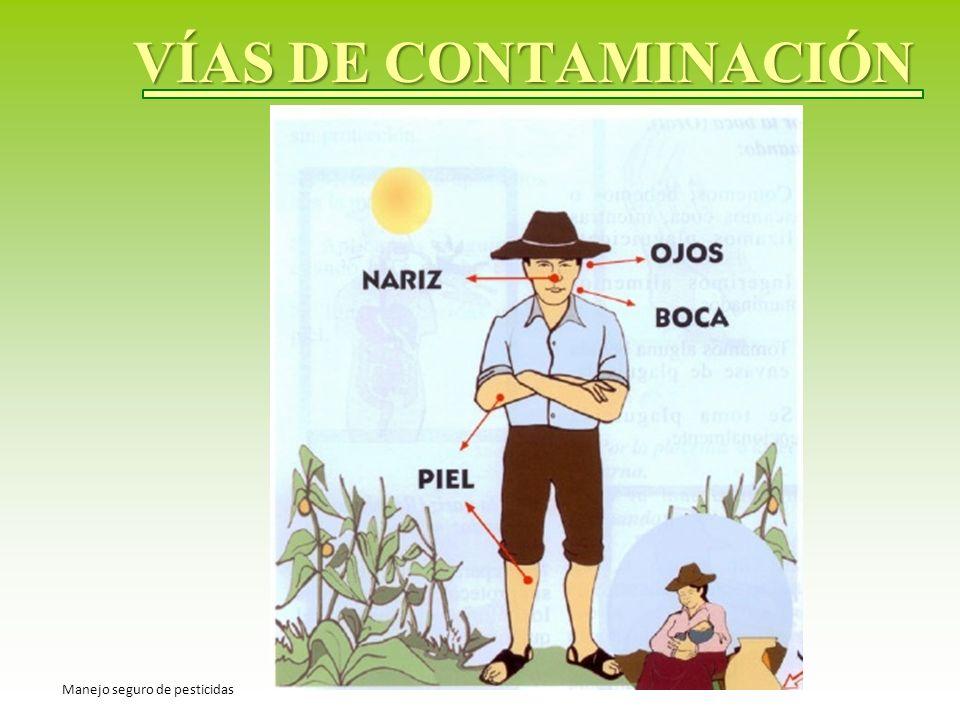 VÍAS DE CONTAMINACIÓN Manejo seguro de pesticidas