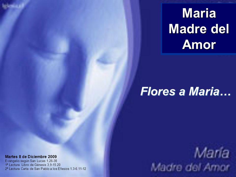 Maria Madre del Amor Flores a Maria… Martes 8 de Diciembre 2009