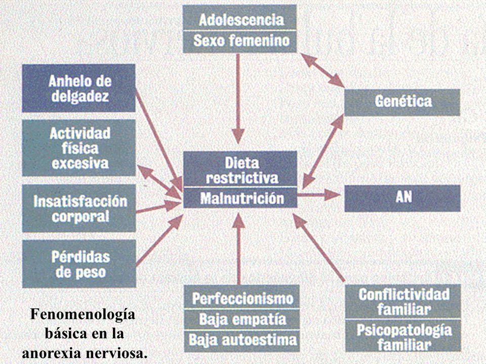 Fenomenología básica en la anorexia nerviosa.