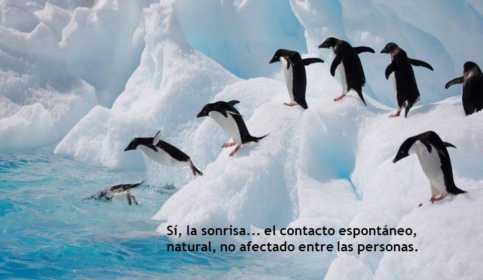Sí, la sonrisa... el contacto espontáneo, natural, no afectado entre las personas.
