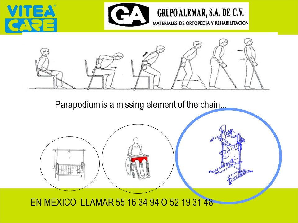 Parapodium is a missing element of the chain....