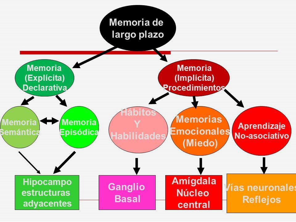 Memoria de largo plazo Hábitos Memorias Y Emocionales Habilidades