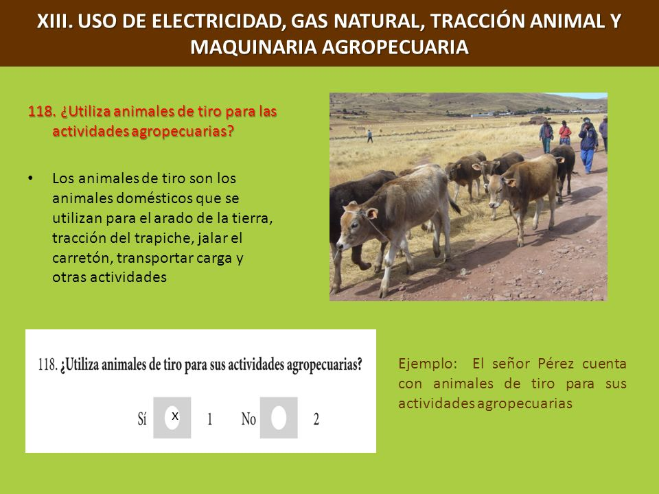 XIII. USO DE ELECTRICIDAD, GAS NATURAL, TRACCIÓN ANIMAL Y MAQUINARIA AGROPECUARIA