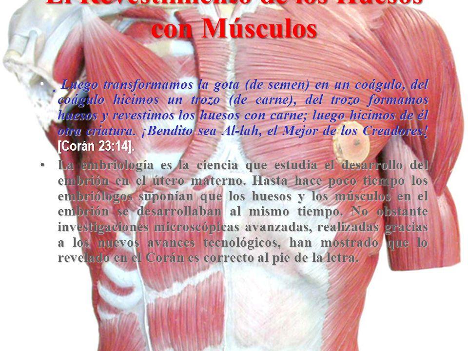 El Revestimiento de los Huesos con Músculos
